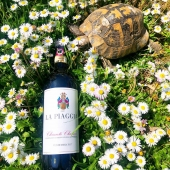 🐢 🍷 😏 . . . . . . .  #flex #vino #winetasting #winelovers #winetime #instawine #winestagram #redwine #food #winery #beer #vin #wineoclock #sommelier #vinho #winelife #love #whitewine #foodporn #wein #instagood #cocktails #wineporn #italy #bar #drinks #tasting #rosso #vinorosso #wine